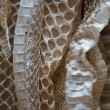 Snakeskin — Stock Photo #11473385