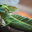 Entire Iguana in terrarium — Stock Photo