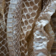 Snakeskin — Stock Photo #11473413