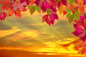 Autumn leaves against the sunset — Stock Photo