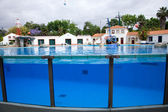 Dolphinarium in Lisbon zoo — Stock Photo