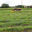 Mowing overgrown fields cornflower — Photo
