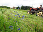 Mowing overgrown fields cornflower — Stock Photo