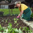 Grandmother planting vegetables — Stock Photo