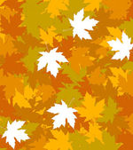 Autumnal concept background — Stock Vector