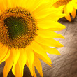 Sunflower petals — Stock Photo