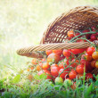 Fresh tomatoes — Stock Photo #11036033
