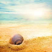 Sea shell on fine sand — 图库照片