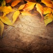 Autumn background — Stock Photo #12019316