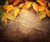 Herfst achtergrond — Stockfoto