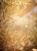 Agriturismo gli ulivi — Foto Stock