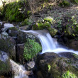 Water stream in French forest — Stock Photo