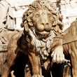 Cibeles Fountain Stone Lion Detail, Madrid — Stock Photo