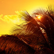 Caribbean Sunset in Mayan Riviera — Stock Photo