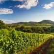 Stock Photo: Vineyard and hilly landscape in Pfalz, Germany
