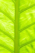 Green Vein — Stock Photo