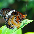 Butterfly — Stock Photo #12221445