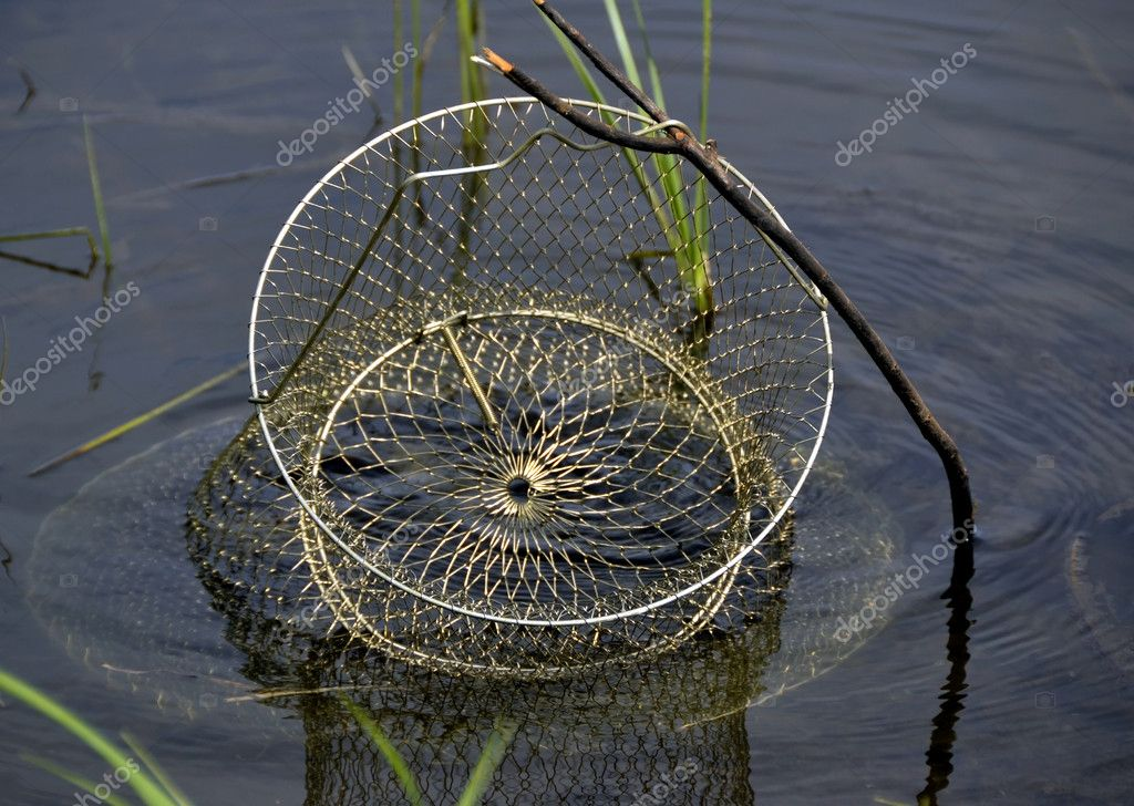 Corf with fish. Catch of the fisherman. Storage of fish — Stock Photo #11803644