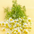 Stock Photo: Chamomile flowers