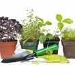 Gardening tools and plants - Stock Photo