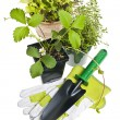 Gardening tools and plants — Stock Photo #11551373