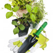 Stock Photo: Gardening tools and plants