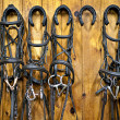 Horse bridles hanging in stable — Stock Photo #11551391