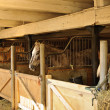 Horses in stables - Photo