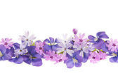 Purple spring flower border — Stock Photo
