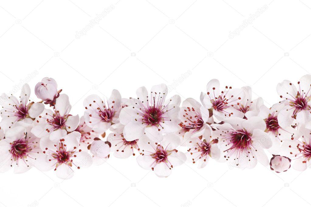 樱花边框 — 图库照片08elenathewise#11551138