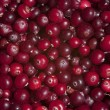 Raw wild cranberries , texture,  background, still life — Stock Photo