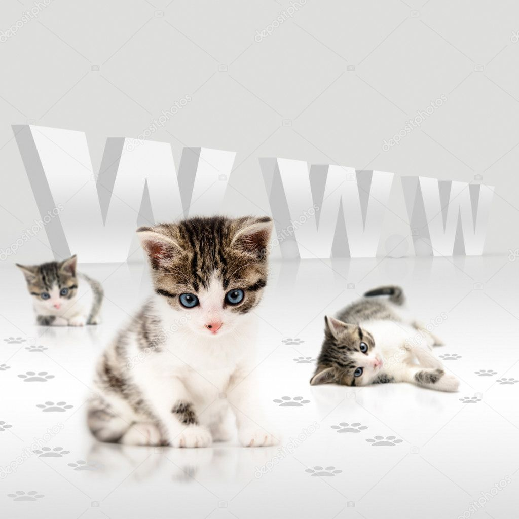 Young cats offering a deal over the internet — Stock Photo #11038889