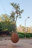 дерево висит в яффо — Стоковое фото