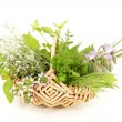 Stock Photo: Kitchen herbs