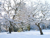 Snowy park — Stock Photo
