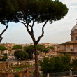 Forum Romanum — Stock Photo