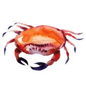 Crab. watercolor painting — Stock Photo