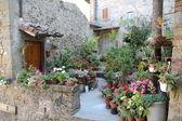 Old courtyard flower garden — Stock Photo