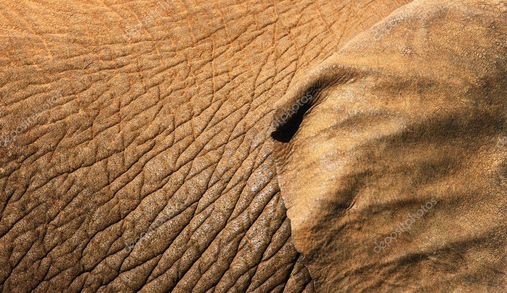 Чем пробить кожу слона 2