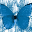 Foto Stock: Butterfly set