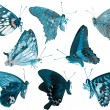 Butterfly collection side view — Stockfoto #11753046
