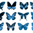 Butterfly collection — Stock Photo #11753430