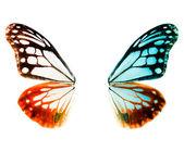 Vlinder vleugels — Stockfoto