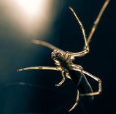 Animal spider — Stock Photo