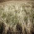 Pasture with dry grass - Photo