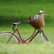 Stockfoto: Red bicycle