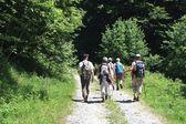 Promenade dans les bois — Stock Photo