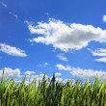 Végétation sur fond de ciel bleu — Foto de Stock   #11400699
