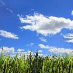 Végétation sur fond de ciel bleu — Stok fotoğraf #11400699