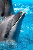 Cabeza del delfín azul agua — Foto de Stock